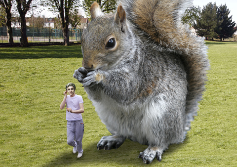 One Direction star viciously attack by Battersea Park squirrel