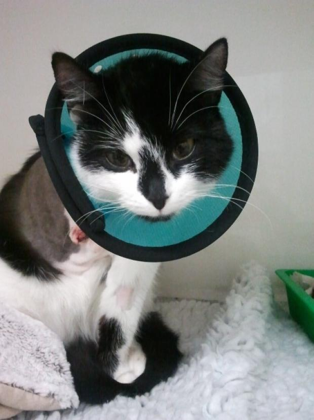 Charity calls for help homing cat